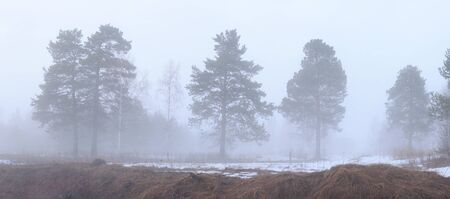 Misty evening. Landscape with the thick mist. photo