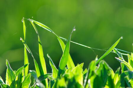 Close up of fresh green grass with drops of dew. photo