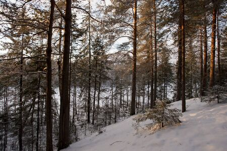 sunset in winter forest Stock Photo - 17360449