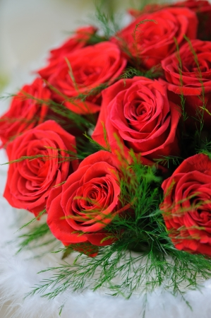 Red roses close up. Background.