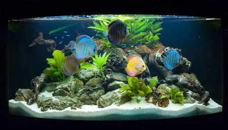 isotope: Aquarium fishes in artificial isotope