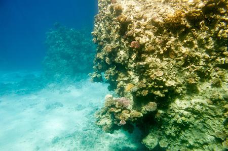 Underwater coral reef. Red Sea. South Sinay.