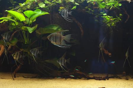 Aquarium fishes in artificial isotope photo