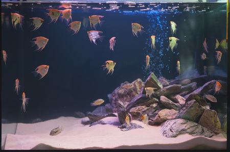 Aquarium fishes in artificial isotope photo