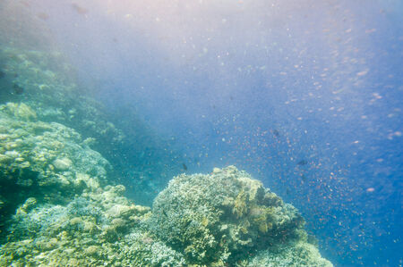 Underwater coral reef and air bubbles left propeller boats. Red Sea. South Sinay.