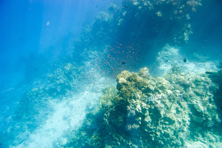 sinay: Underwater coral reef. Red Sea. South Sinay.