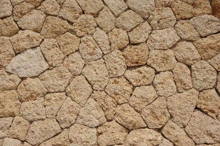 mollusc: Close up of wall stones with mollusc tracks