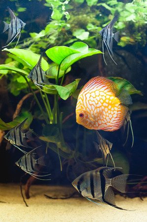 freshwater aquarium plants: Aquarium fishes in artificial isotope