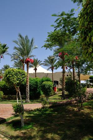 Hotel. Sharm-El-Sheikh. South Sinay. 30 june 2014