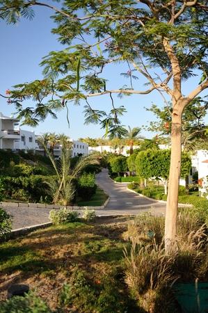 Hotel. Sharm-El-Sheikh. South Sinay.30 june 2014 Editorial
