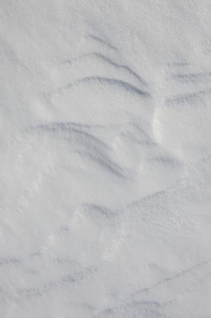 ice crust: Thin crust of ice over snow Stock Photo