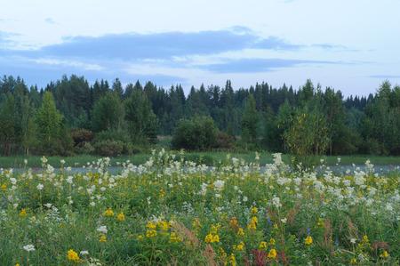 field of flowers: Field flowers.