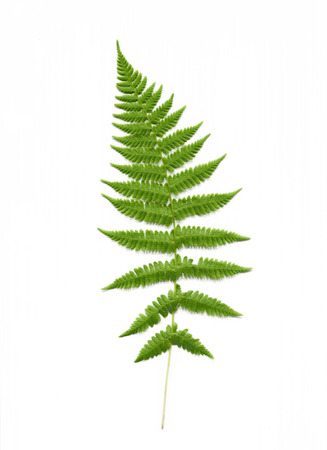 Isolated scan of fern plant