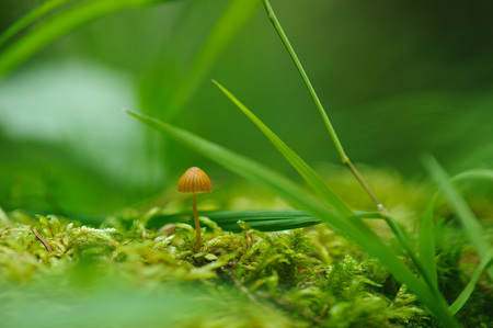 Poisonous toadstool on the moss in forest close up