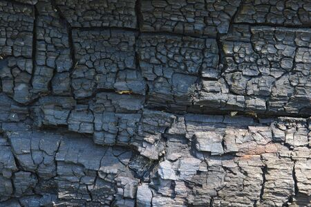 Close up of burnt pine tree surface. Stock Photo