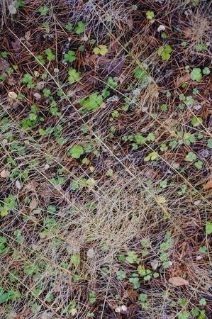 oxalis: Oxalis in autumn forest