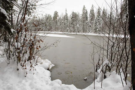 ice crust: Surface of the forest lake in beginning of winter with waterlily leaves under the thin ice crust