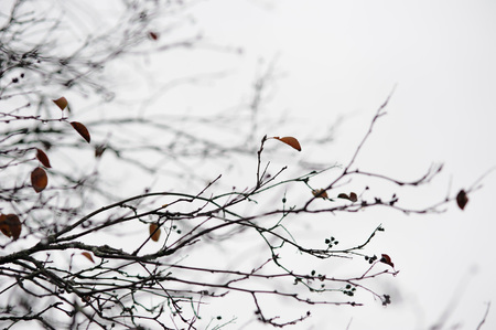 deplorable: empty tree branches in late autumn