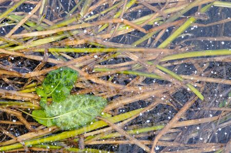 crust: Plants in frozen thin crust of ice.