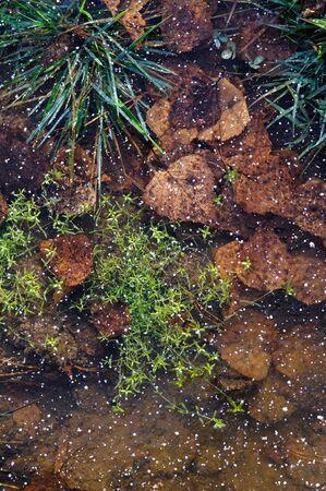 mood moody: Plants in frozen thin crust of ice.