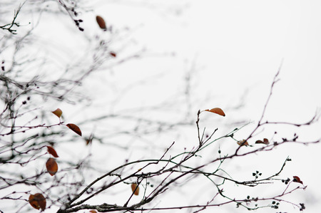 dreary: empty tree branches in late autumn