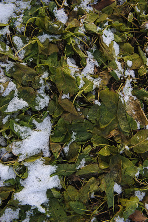 coldness: Background. Plants