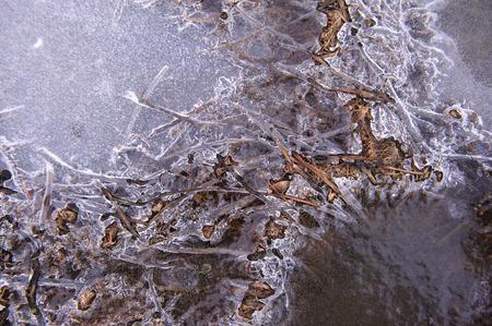 ice crust: Plants in frozen thin crust of ice.