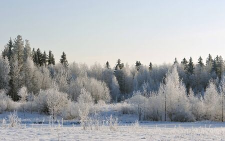 estado del tiempo: trees covered with hoarfrost in frosty day