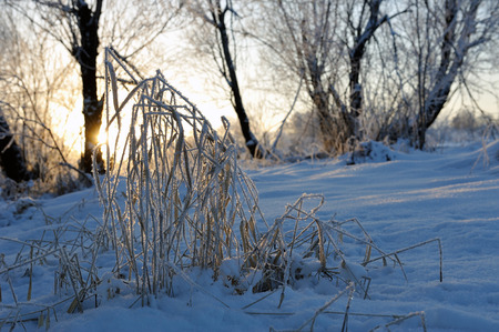 is covered: Plants covered by hoarfrost Stock Photo