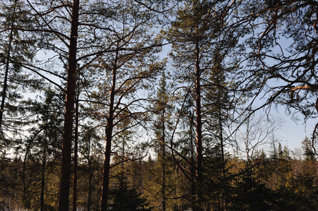 wildwood: Spring view of taiga forest Stock Photo