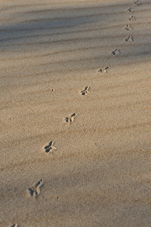 traces: Birds traces on the sand. Stock Photo