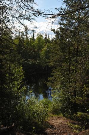 taiga: Taiga landscape with little lake.