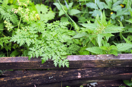 Close up of green plants in garden. Fern, grass and nettle.