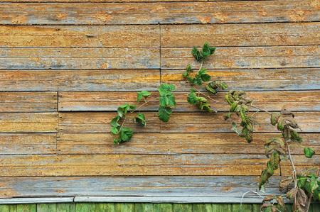 Vintage wooden deck close up. Stock Photo