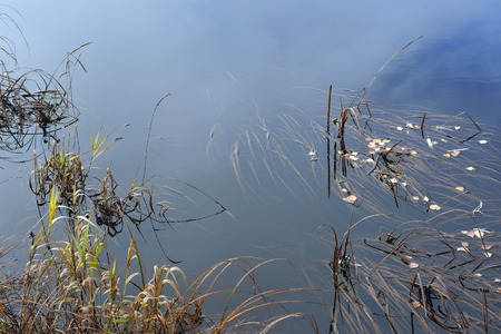 duration: Abstract. Flow of time. The river in its flow swaying the grass growing under water