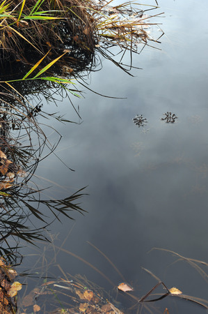 endlessness: Abstract. Flow of time. The river in its flow swaying the grass growing under water
