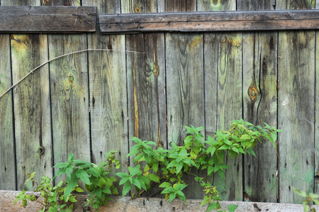 wainscot: Wall of an vintage wooden building