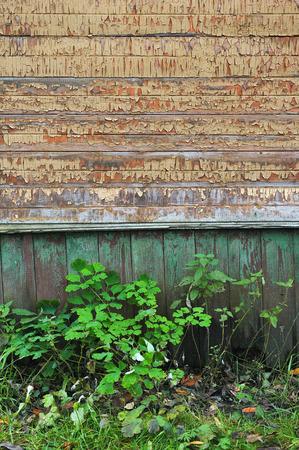 wainscot: Vintage wooden wall close up.