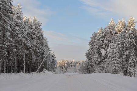 Snowy road trough wintry forest Stock Photo