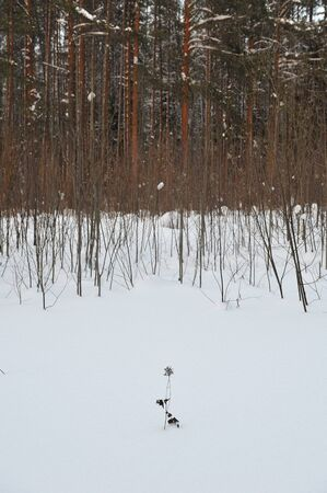 drifts: willow thickets under the snow drifts