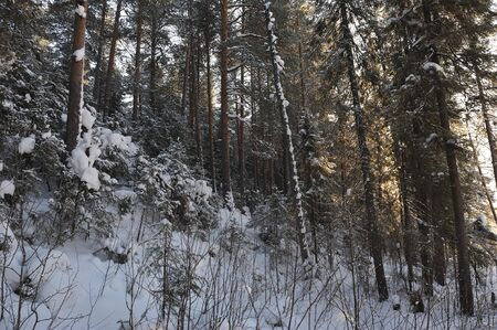 Landscape of the wintery snow covered forest view with sun glare