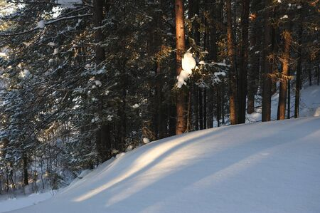 wildwood: Landscape of the wintery snow covered forest view with sun glare