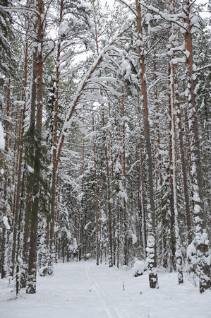 Landscape of the wintery snow covered forest view