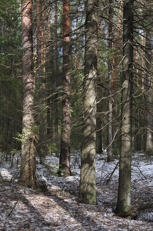 thawed: Nature view of the spring in taiga