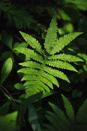 Plants of the magic forest. Fern Stock Photo