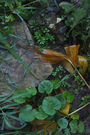 wilting of plants in early autumn Stock Photo