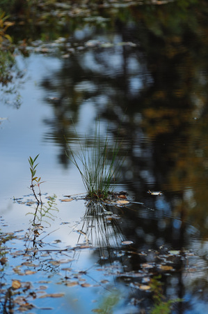 Close up background of the forest lake surface Stock Photo
