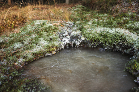 Frozen forest stream surrounded by moss covered with frost.