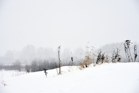 Field grass in winter during a blizzard.
