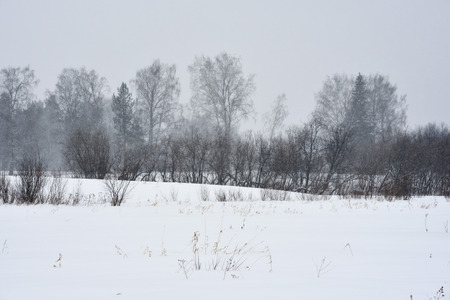 Field trees in winter during a blizzard. Stok Fotoğraf